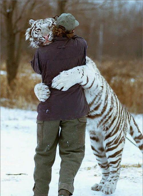 http://dlyavas.ru/images/fotogal/17/2007-01-18_161936_tiger.jpg
