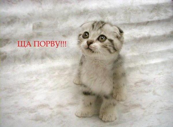 Котенок ща порву животные длявас ru