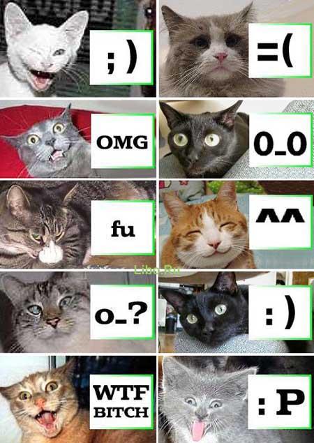 Мимика кошек.