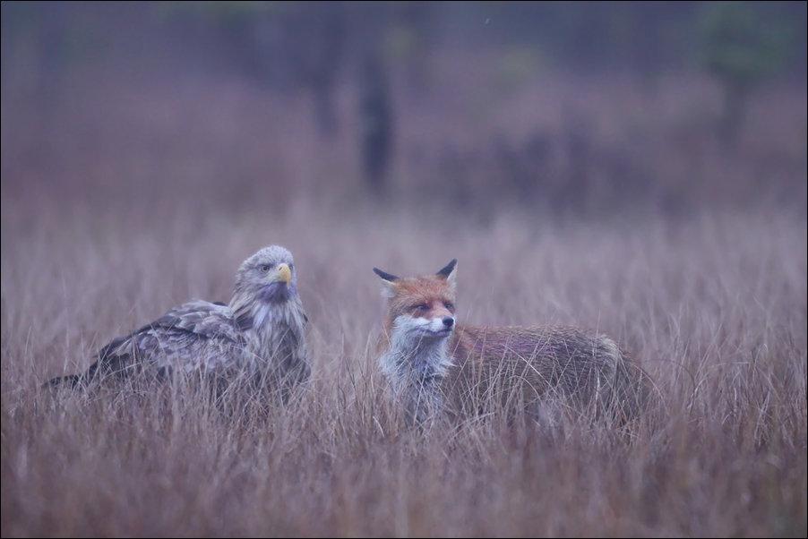 станешь картинки орел и лиса фото точно